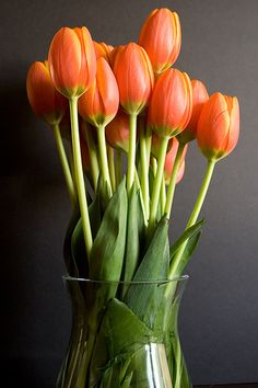 Tulips -  Apart from rosé, in Persia to give a red tulips was to express your love. The black Center of the red tulip was said to represent lover's heart burned to a coal by love's passion. It is the most graceful of all the flowers .