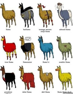 Different types of llamas MEME