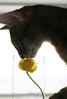 cat sniffing flower