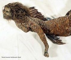 dr. takeshi yamada | Dr Takeshi Yamada's Museum of World Wonders- Fiji Mermaid