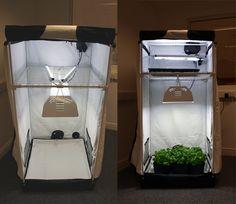 Growing Weed Indoors the Easy Way - Best Seed Bank