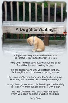 """""""A dog sits waiting"""" - What a heartless thing to do to the most loving, loyal, grateful, innocent beings...PLEASE don't abandon your dog!"""