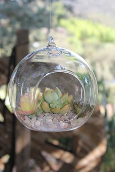 Awesome Hanging or sitting Succulent Glass by TheSucculentSource, $23.00