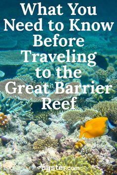 Whether you're an avid scuba diver or amateur snorkeler, a trip to the Great Barrier Reef should make everyone's bucket list. Not only is it the world's largest coral reef system, but the UNESCO World Heritage site is also one of the seven natural wonders of the world. But before you go, check out these eight handy tips, including where to fly into and the best time to visit (hint: avoid stinger season).