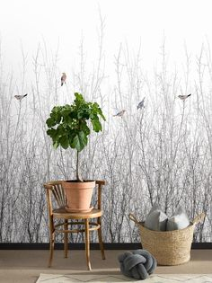 Sparrow by Engblad & Co - White - Mural : Wallpaper Direct Wallpaper Display, Hallway Wallpaper, Bird Wallpaper, White Wallpaper, Animal Wallpaper, Nature Wallpaper, Birch Tree Wallpaper, Sparrow Bird, Watercolor Bird
