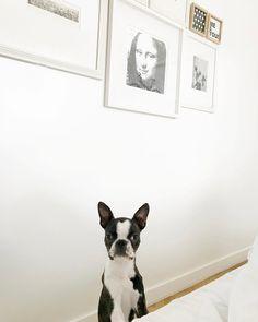 "9,569 curtidas, 40 comentários - Fabiana Justus (@fabianajustus) no Instagram: ""Acorda mamãe! Eu quero passear! 😂❤#nika #sunday #cute #bostonterrier #goodmorning #dog #pet #love"""