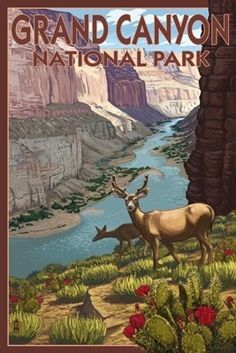 Deer Scene - Grand Canyon National Park - Lantern Press Original Poster