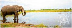 Botswanan eläimet