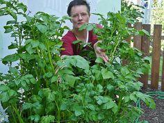 Kaum noch zu sehen vor lauter Blättern: Verena Bartoniczek mit ihrem Kartoffelturm.