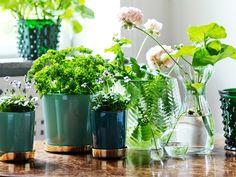 Gröna växter i vackra kärl!