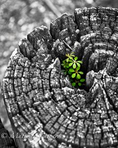 Black And White Nature Photography Trees Color Splash 57 Trendy Ideas Splash Photography, Color Photography, Macro Photography, Black And White Photography, Color Splash, Color Pop, Foto Macro, Growth And Decay, New Growth