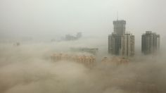 Scientists: Beijing's Air Pollution Is Like Being in Nuclear Winter. It's not just people at risk, though. The smog is even affecting China's plants, preventing them from successfully photosynthesizing, which in turn threatens the population's food supply.