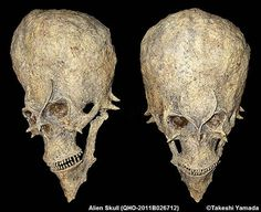 "Alien Skull unearthed in Eastern Mongolia ~ Believed to belong to ancient ""Dreptian"" royalty wiped out by the common cold centuries ago... Ancient mystery or hoax?"
