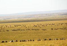 Masai Mara ...   #serengeti #africa #sunset #nature #travel #tourism #safari