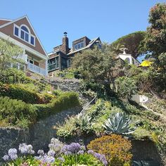 Up the stairs and home! A couple of  houses with beautiful stepped landscaping that I saw on a day trip in  Sausalito California.