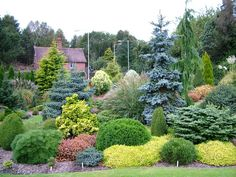 Conifers garden - Foxhollow in early October Privacy Landscaping, Hillside Landscaping, Front Yard Landscaping, Evergreen Landscape, Evergreen Garden, Small Landscape Trees, Japanese Garden Landscape, Evergreen Shrubs, Garden Shrubs