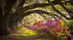 Charleston, South Carolina  Southern hospitality is very much alive in this vibrant city that delightfully struts its historical past (think: antebellum mansions, plantations and culinary institutions).