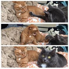 When you check to see if bae is still mad at you...