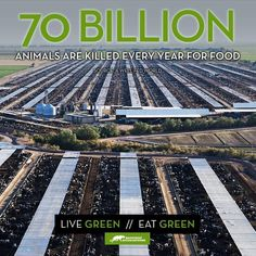 70 BILLION animals are killed every year for food, go #vegan
