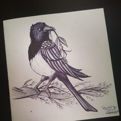 Magpie tattoo design for a trade ♥ Work in progress, not for personal use or re sale. Please pm or email me if interested in a commission :) #magpie #bird #fushciaflower #branch #trees #illustrator #illustration #pen #biro #drawing #tattoo #design #workinprogress