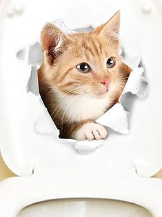 Cheap 3D Wall Stickers Online | 3D Wall Stickers for 2021 Wall Stickers Animals, Cheap Wall Stickers, Wall Decor Stickers, Stickers Online, Living Room Decor Pillows, Home Wall Decor, Cat Toilet, 3d Wall, Funny Cats