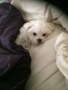 This looks my Lillie Belle in the morning...