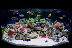 2008 Top 10 Freshwater Tanks - Fantastic colors!