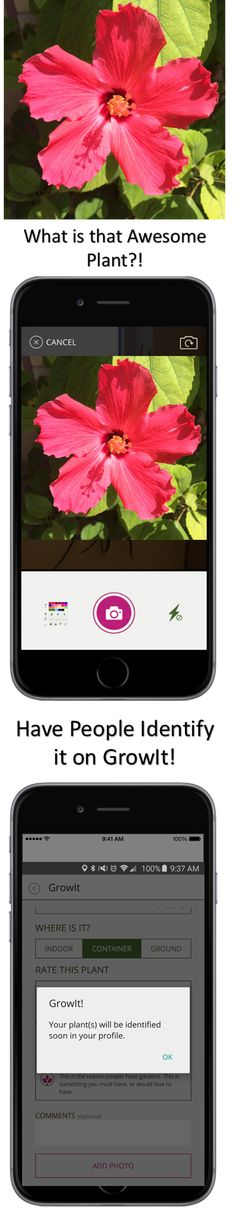 Need Help Identifying a Plant? Upload it to GrowIt! and see what the community thinks! Available for #FREE on the App Store and Google Play! GrowIt! is the only way to Garden Socially. Want to know if it's a weed or something you should keep? Use GrowIt! to find out!