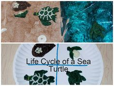Wikki Stix Sea Turtle Life Cycle for Kids! Sea Turtle Life Cycle, Turtle Day, Cycle For Kids, School Age Activities, Preschool Science, Science Week, Turtle Crafts, Marine Biology, Project Based Learning