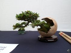 Gallery - Bonsai Empire - Too cool