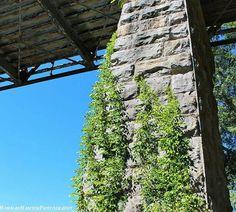 #alabama #alabamaparks #alabamafindings #cullmanal #cullman #love #nature #photography #pictures #photo #cute #naturephotography #professionalpictures #pretty #beautiful #beauty #professional #rocks #plants #blue #green #hannahhansenphotography #leaves #mulberryriver #mulberry #oldbridge #bridge