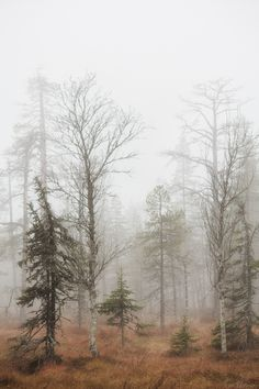 Autumn forest (Southern Lapland, Finland) by Tiina Törmänen nw. Winter Forest, Foggy Forest, Misty Forest, Beautiful World, Beautiful Places, Landscape Photography, Nature Photography, Travel Photography, Nature Sauvage