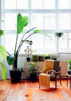 decoration salon moderne plantes et grandes fenetres