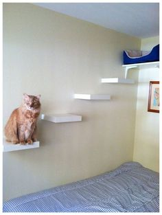 Best Quality Cat Enclosures And Cat Tunnels Ideas 51