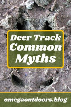 So many naive #hunters say that when you can see the dewclaws in a track that it is automatically a huge buck. Any deer can leave dewclaw prints depending on how it stands, how fast they are going, or if they are scraping. There are many ways to tell the story of a track but remember all #deer have dewclaws, not just the giants!