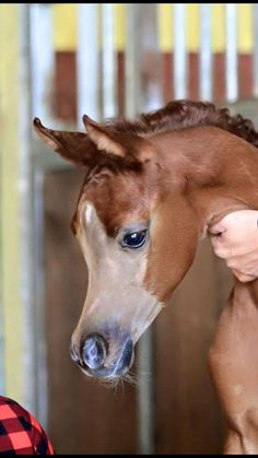 Well now, there is a pretty clear exampe of a foal shave! http://imgzu.com/image/ea8AAS http://imgzu.com/image/eabBu1