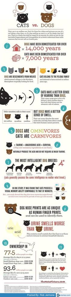 Dogs vs Cats, interesting to compare because I have both dogs and cats in my house.