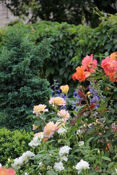 сочетание цветов потрясающее