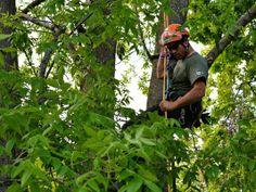 Arborists climb trees in Burlington competition http://www.burlingtonfreepress.com/story/news/local/vermont/2014/05/31/arborists-climb-trees-burlington-competition/9813705/