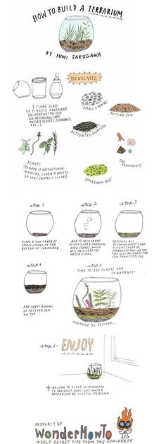 DIY Build Your Own Terrarium DIY Terrarium Garden--I got two awesome bowls that I'm turning into terrariums!!!