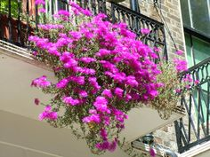 Cute Balcony Ideas This brilliant flowers balcony plans idea we think effectively mixing smart idea design plan, inspiring design emerge, material variety, influential quality of ornament decoration and design idea synchronization. Balcony Hanging Plants, Balcony Planters, Balcony Flowers, Balcony Ideas, Balcony Gardening, Balcony Design, Best Flowers For Shade, Amazing Flowers, Pink Flowers