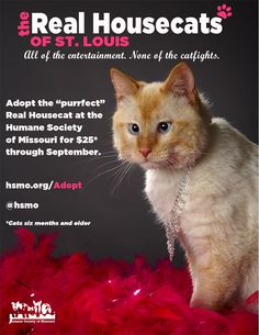 Only At The Humane Society Of Missouri Www Hsmo Org Adopt Humane Society Service Animal Cat Adoption