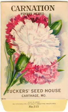 Vintage Flower Seed Packet Tuckers Seed House Lithograph CARNATION Carthage, Missouri.