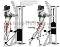 Standing cable hip extension. A unilateral isolation exercise. Target muscle: Gluteus Maximus. Synergists: Hamstrings (Biceps Femoris, Semitendinosus, and Semimembranosus). https://www.musclesaurus.com/