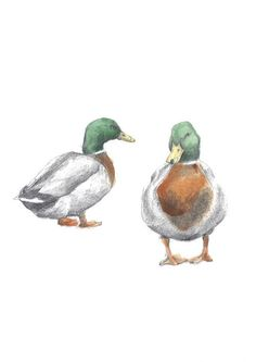 Two Mr Mallards by Hannah Longmuir