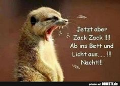 funny picture, but now zack, zack ……. jpg – One of 33184 files … - Birthday quotes Birthday Quotes, Satire, Good Night, Funny Pictures, Animals, Facebook Humor, German Language, Albino, Minion