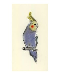 How to draw a cockatiel step by step birds animals free online ideas pinterest - Dessin calopsitte ...