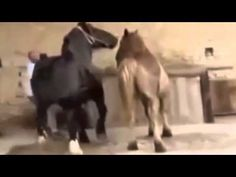 New Animal mating video compilation  Horse mating,Horse breeding, animal...