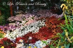 Life, passion and beauty: Pictures: Expozitia de flori, fructe si seminte Plants, Plant, Planting, Planets