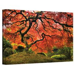 """Japanese Tree"" by John Black Photographic Print on Canvas"